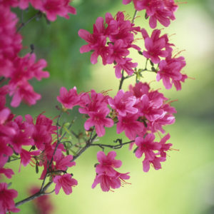 What do flower colours mean?