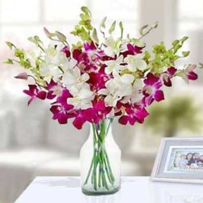 Exotic Orchids